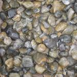 tiger stripe beach pebbles